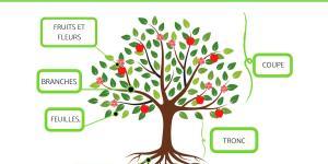 Parties d'un arbre - Schéma d'un arbre