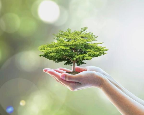 Valeurs environnementales : Définition et exemples