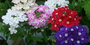 11 plantes qui fleurissent toute l'année