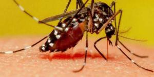 A quoi sert un moustique