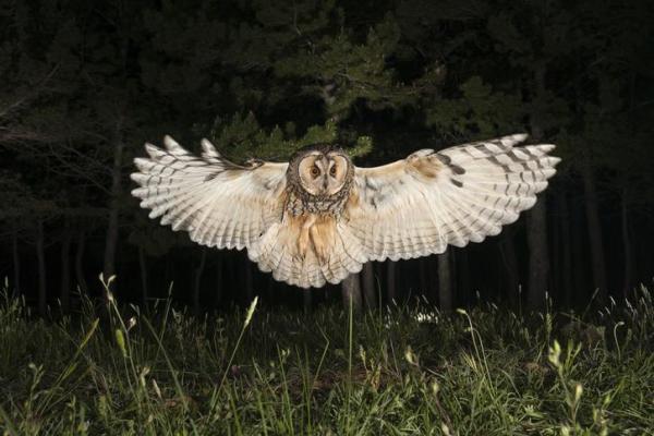 Oiseaux nocturnes : noms et types - Oiseaux nocturnes : noms des espèces