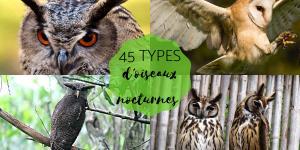 Oiseaux nocturnes : noms et types