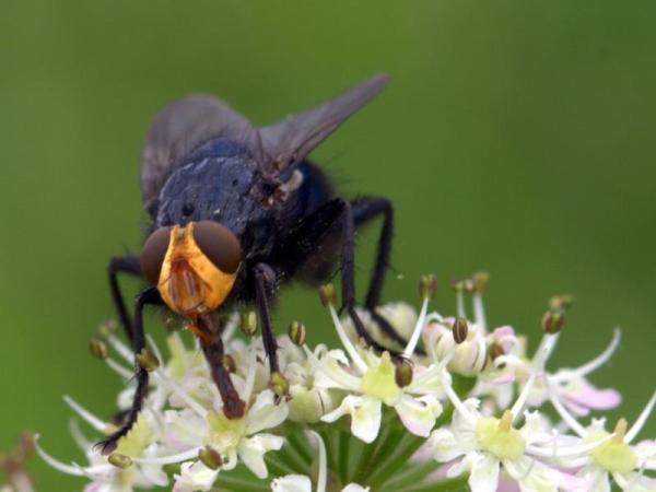 A quoi servent les mouches - Utilité des mouches - A quoi servent les mouches ?