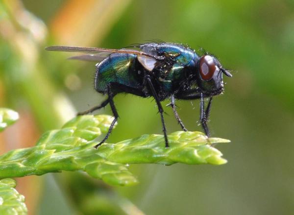 A quoi servent les mouches - Utilité des mouches