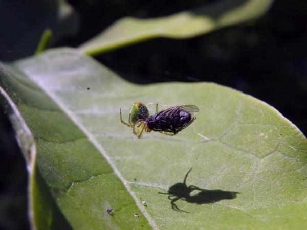 A quoi servent les mouches - Utilité des mouches - Les mouches servent de nourriture pour les insectivores
