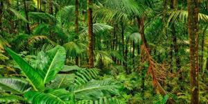 Écosystème des forêts tropicales et ses caractéristiques