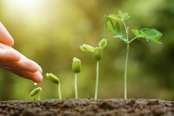 Croissance d'une plante - Commet pousse une plante