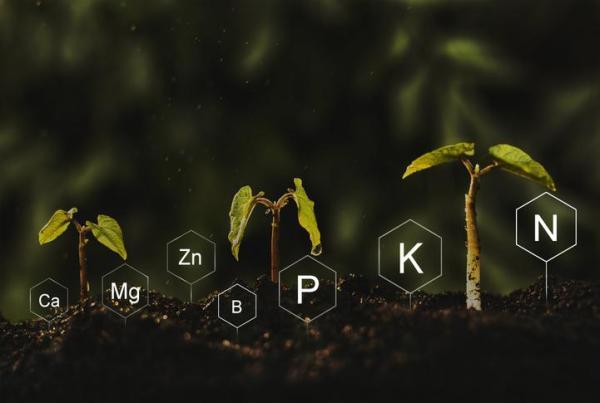 Croissance d'une plante - Commet pousse une plante - De quoi a besoin une plante pour pousser ?