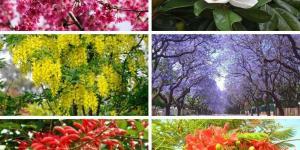 18 arbres à fleurs - Rouges, bleues, roses et blanches