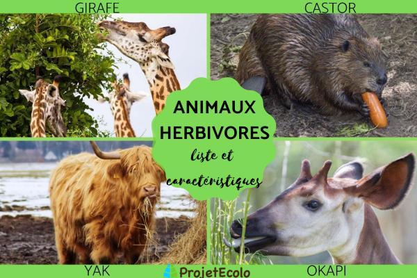 Animaux herbivores : liste et caractéristiques