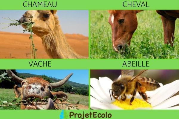 Animaux herbivores : liste et caractéristiques - Liste d'animaux herbivores