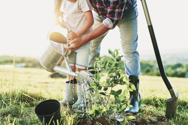 Le micocoulier - Plantation et entretien - Arrosage du micocoulier