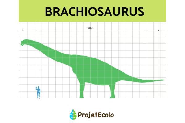 Dinosaures herbivores : noms, types, caractéristiques et photos - Brachiosaurus ou brachiosaure