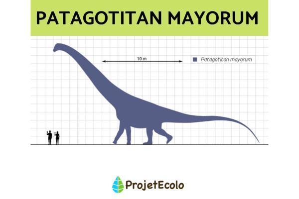 Dinosaures herbivores : noms, types, caractéristiques et photos - Patagotitan Mayorum