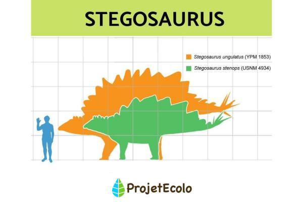 Dinosaures herbivores : noms, types, caractéristiques et photos - Stegosaurus