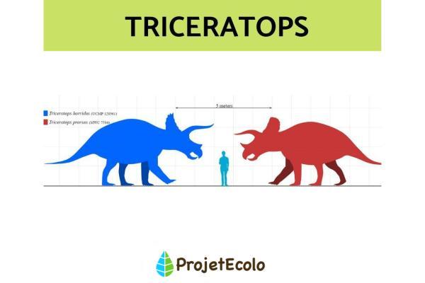 Dinosaures herbivores : noms, types, caractéristiques et photos - Triceratops