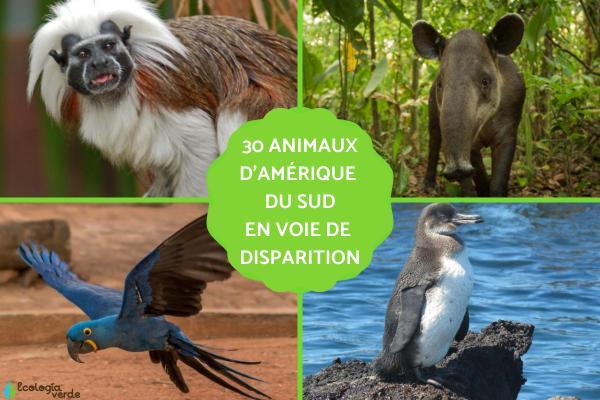 Animaux d'Amérique du Sud en voie de disparition
