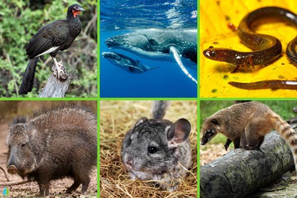 Animaux d'Amérique du Sud en voie de disparition - Autres animaux en danger d'extinction en Amérique latine