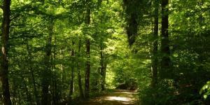 Écosystème forestier - Définition, caractéristiques, flore et faune