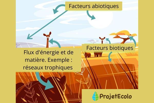 Fonctionnement d'un écosystème - Schémas, définitions et exemples - Composants d'un écosystème