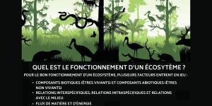 Fonctionnement d'un écosystème - Schémas, définitions et exemples