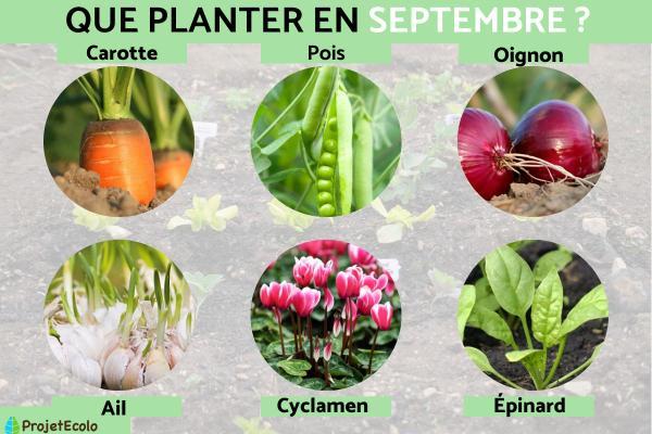Que planter en septembre