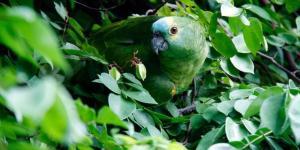 Les animaux de la forêt tropicale - Noms, caractéristiques et photos
