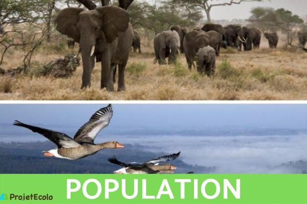 Niveaux d'organisation du vivant : Définition et exemples - 2nd niveau d'organisation du vivant : population