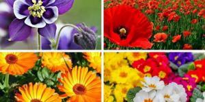 22 fleurs à planter au printemps - Liste avec photos