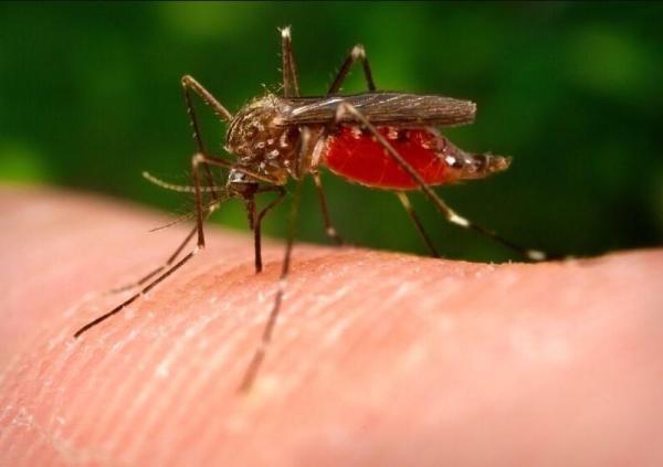 Insectes piqueurs - Des jardins, volants et suceurs