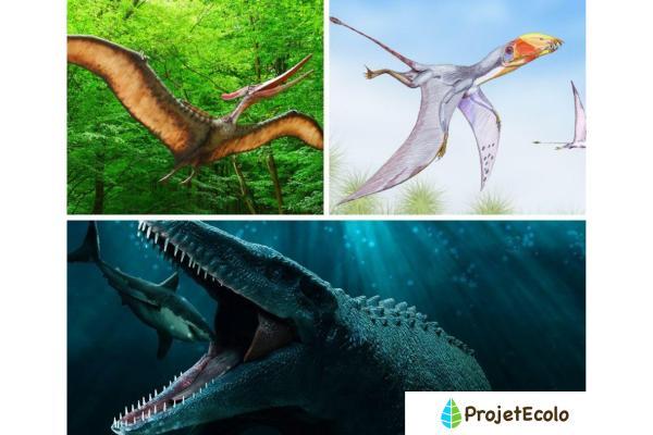 Dinosaures carnivores : noms, types, caractéristiques et photos - Dinosaures carnivores de Jurassic Park et Jurassic World - Liste d'exemples