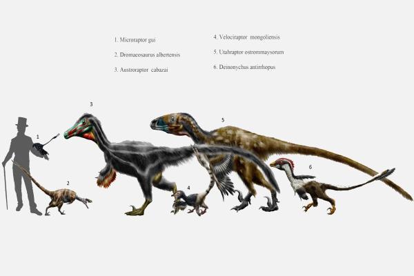 Dinosaures carnivores : noms, types, caractéristiques et photos - Exemples de dinosaures carnivores : le Velociraptor et ses caractéristiques
