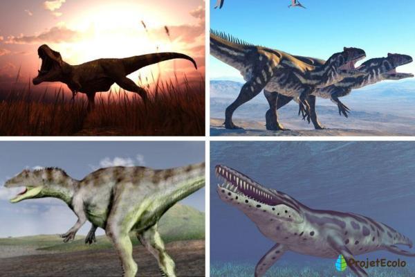 Dinosaures carnivores : noms, types, caractéristiques et photos - Exemples des plus grands dinosaures carnivores - Noms et photos