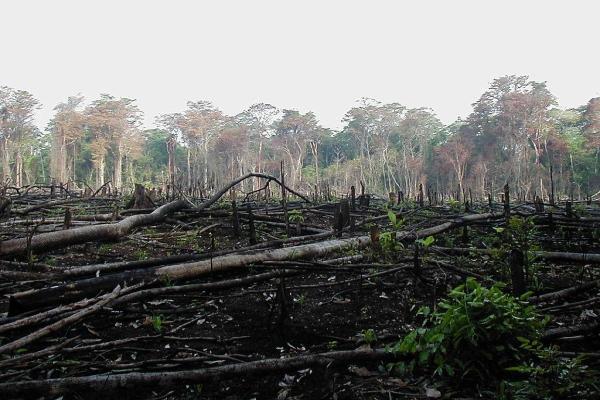20 problèmes environnementaux - Solutions et exposé sur l'environnement - Déforestation